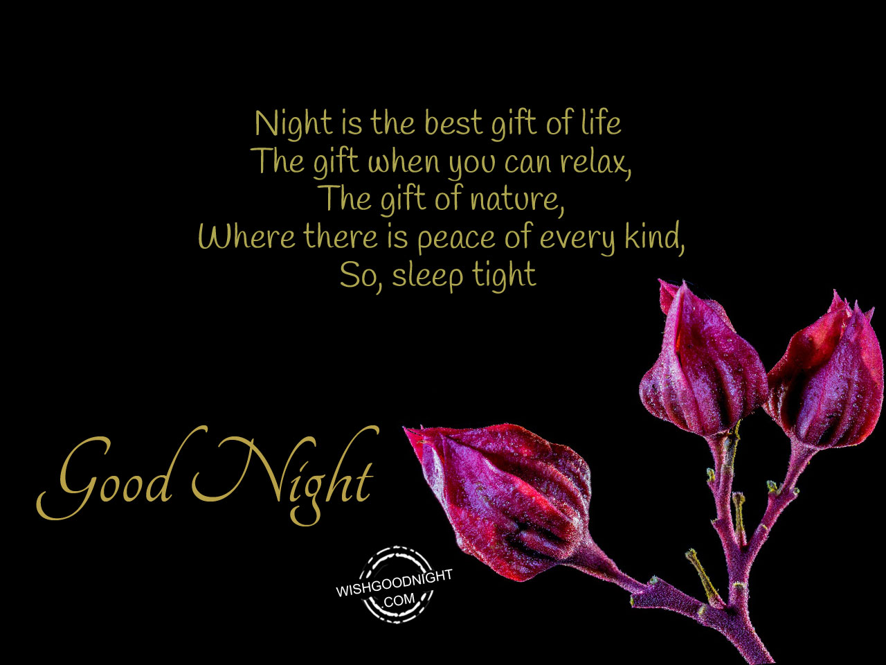 Night Is The Best Gift Of Life  Best Wishes In Life